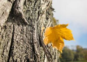 04_Herbst
