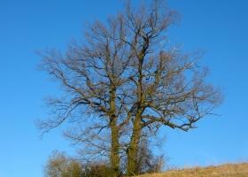Herbstbaum_0660
