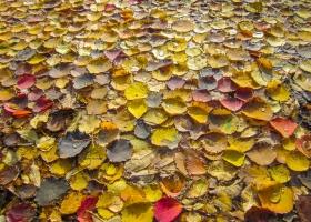 01_Herbst_Teich