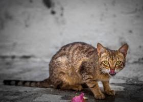Katze_0975