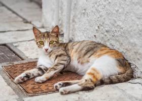 Katze_1027