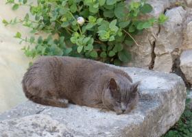 Katze_4149