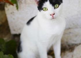 Katze_7190