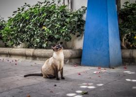 Katze_0410