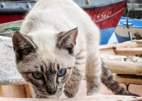 Katze_0556