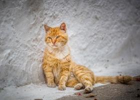 Katze_1574