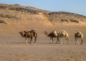 Marokko_6304