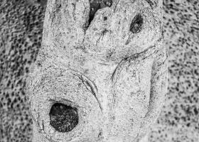 Eukalyptusholz_01