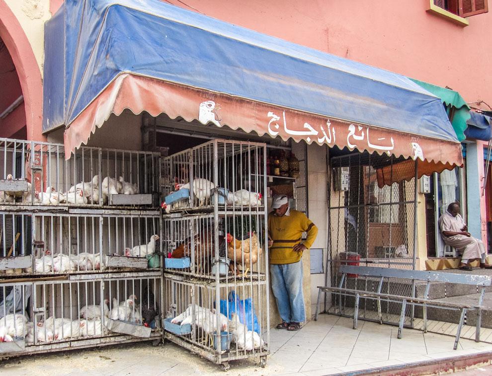 Tierhandlung Marokko