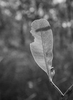 Blatt Baum