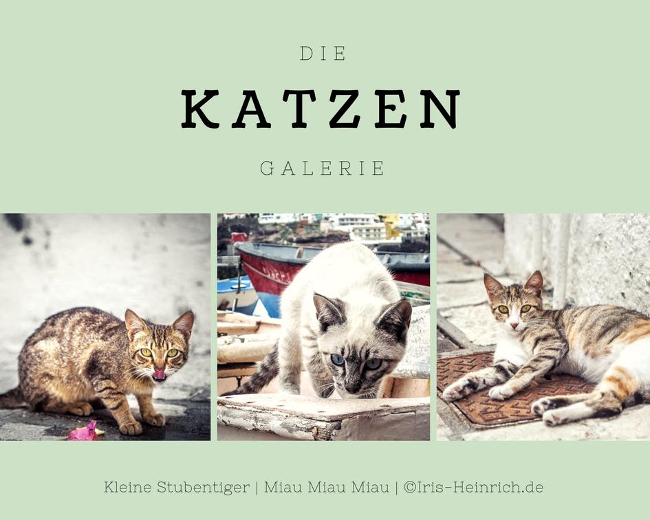 Katze Fotografien